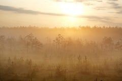 Névoa da manhã na floresta no alvorecer Fotos de Stock Royalty Free