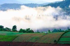 Névoa da manhã na montanha Imagens de Stock Royalty Free
