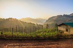 Névoa da manhã na montanha Foto de Stock Royalty Free