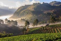 Névoa da manhã na montanha Imagem de Stock