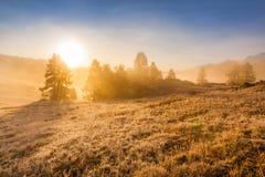 Névoa da manhã nas montanhas Geada na grama e nas árvores Fotografia de Stock