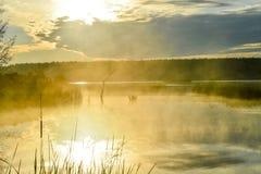 Névoa da manhã no lago no sol fotografia de stock royalty free