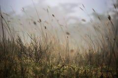 Névoa da manhã (nuvens) que cobre a terra no parque nacional de Ngorongoro (Tanzânia) Foto de Stock Royalty Free