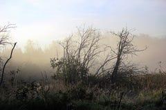 Névoa da manhã que aumenta fora de um pântano com árvores mostradas em silhueta Fotografia de Stock Royalty Free