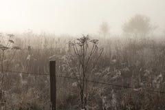 Névoa da manhã sobre o prado fotografia de stock