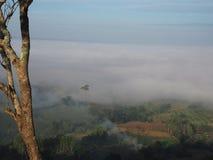 Névoa da montanha da árvore Fotos de Stock