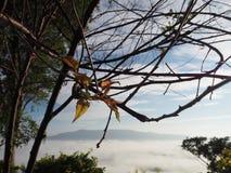 Névoa da névoa da montanha da árvore Fotografia de Stock Royalty Free