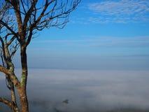 Névoa da névoa da montanha do céu da árvore Foto de Stock