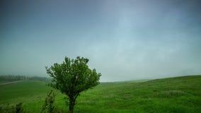A névoa da nuvem cobre um campo verde com uma árvore solitária em Cazaquistão - 4K Timelapse video estoque