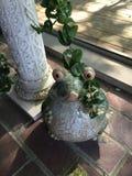 Névoa da porcelana que guarda a planta Fotos de Stock Royalty Free
