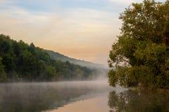 Névoa de flutuação no rio do verão com a árvore sobre a água fotos de stock