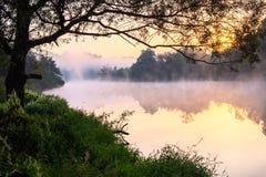 Névoa de flutuação no rio do verão com a árvore sobre a água imagem de stock royalty free
