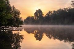 Névoa de flutuação no rio do verão com a árvore sobre a água imagens de stock royalty free