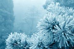 Névoa de gelo na árvore Imagem de Stock Royalty Free