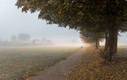 Névoa densa pesada em um parque Imagens de Stock
