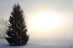 Névoa do inverno Foto de Stock