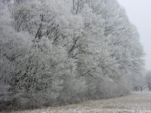 Névoa do inverno em uma floresta com as árvores altas em Alemanha Orvalho geado na madeira durante um fim de semana frio foto de stock royalty free
