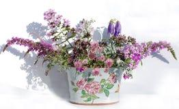 Névoa do Lilac Foto de Stock
