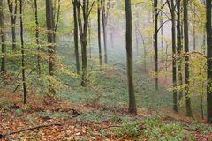 Névoa do outono da floresta Foto de Stock Royalty Free