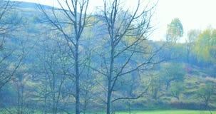Névoa do outono na floresta misturada Autumn Dream Parque na névoa vídeos de arquivo