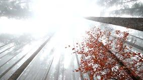 Névoa do outono na madeira video estoque