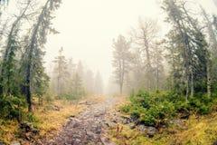 Névoa do outono sobre o rio e a floresta - paisagem bonita da queda com um rio que atravessa as pedras, cercadas por florestas no Foto de Stock Royalty Free