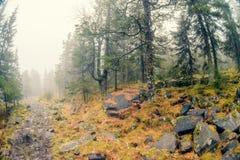 Névoa do outono sobre o rio e a floresta - paisagem bonita da queda com um rio que atravessa as pedras, cercadas por florestas no Fotografia de Stock