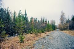 Névoa do outono sobre o rio e a floresta - paisagem bonita da queda com um rio que atravessa as pedras, cercadas por florestas no Imagens de Stock