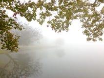 Névoa e árvores do lago Fotografia de Stock Royalty Free