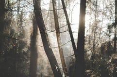 Névoa e córrego da madeira Imagem de Stock Royalty Free