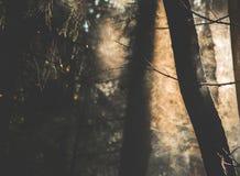 Névoa e córrego das árvores Imagem de Stock Royalty Free