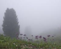Névoa e flores Foto de Stock