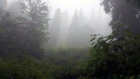Névoa e floresta Imagens de Stock