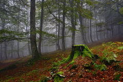 Névoa e floresta, mágica Fotografia de Stock Royalty Free