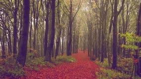 Névoa e folhas de queda em uma floresta durante o outono video estoque