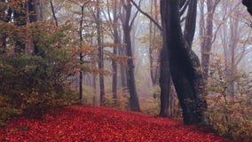 Névoa e folhas de queda em uma floresta durante o outono filme