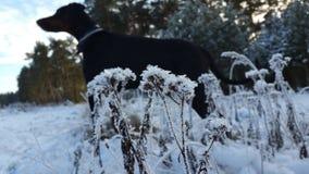 Névoa e gelo no trajeto Foto de Stock