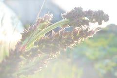 A névoa e a lâmina de grama Imagem de Stock