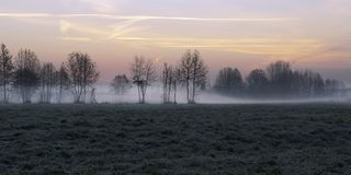 Névoa em árvores do inverno Lombardia Italy fotografia de stock royalty free