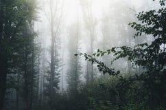 Névoa em madeiras misteriosas com folha Imagem de Stock