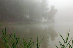 Névoa em um lago Fotos de Stock Royalty Free