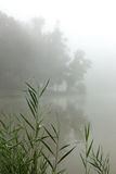 Névoa em um lago Imagem de Stock Royalty Free