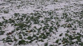 A névoa escura e a agricultura do inverno colocam com as plantas da neve e da colza filme