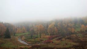A névoa está vindo na floresta video estoque