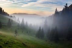 Névoa fria no nascer do sol quente nas montanhas Imagem de Stock Royalty Free