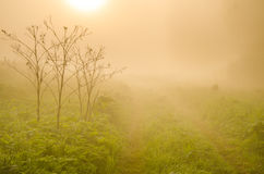 névoa grossa da manhã na floresta do verão Foto de Stock