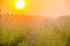 névoa grossa da manhã na floresta do verão Imagens de Stock