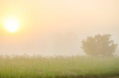 névoa grossa da manhã na floresta do verão Fotografia de Stock Royalty Free