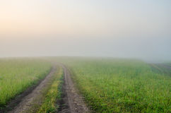 névoa grossa da manhã na floresta do verão Fotos de Stock Royalty Free