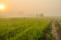névoa grossa da manhã na floresta do verão Foto de Stock Royalty Free